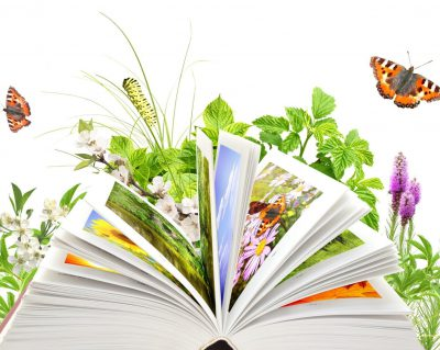 12 мая — День экологического образования