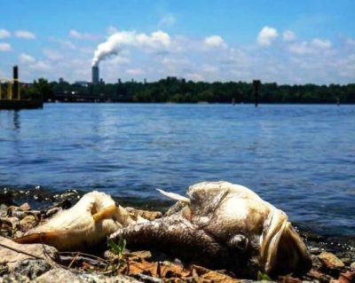 Экологическое загрязнение водных ресурсов и расчет ущерба